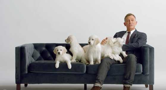 Daniel Craig And Puppies Our Hearts Can T Cope Celebrity Heat