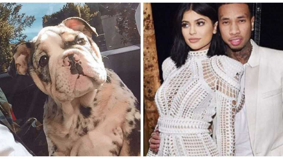 Kylie Jenner and Tyga introduce new pup Rolly to the family and he wasn't cheap!