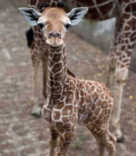 Gallery The Cutest Baby Animals Ever From Teeny Weeny