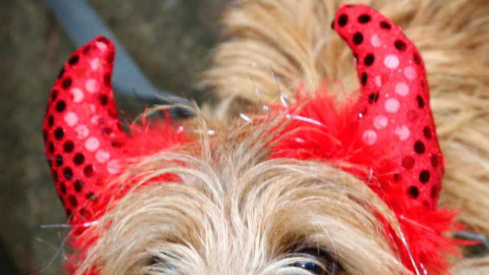 Happy Halloween Check Out These Super Cute Dogs Dressed Up For